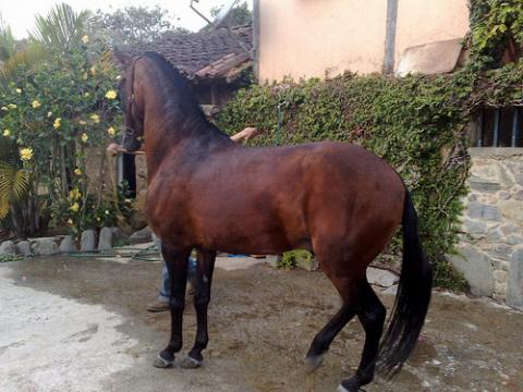 caballo-animal.jpg